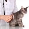 Ветеринарные клиники в Апатитах